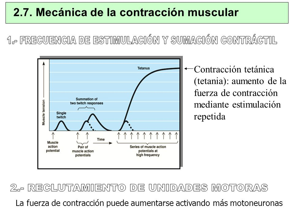 1.- FRECUENCIA DE ESTIMULACIÓN Y SUMACIÓN CONTRÁCTIL