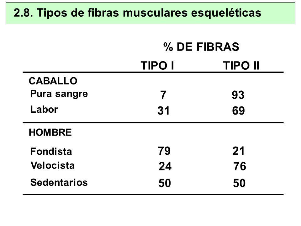 2.8. Tipos de fibras musculares esqueléticas