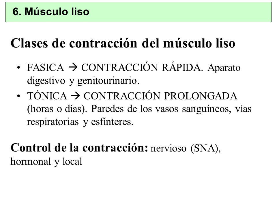 Clases de contracción del músculo liso