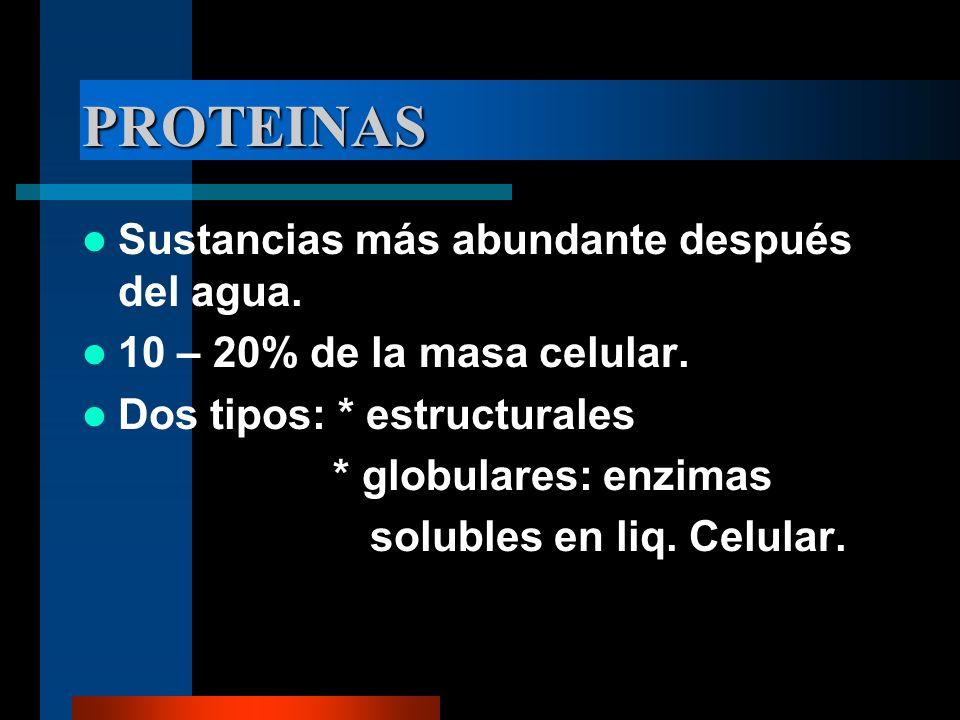 PROTEINAS Sustancias más abundante después del agua.