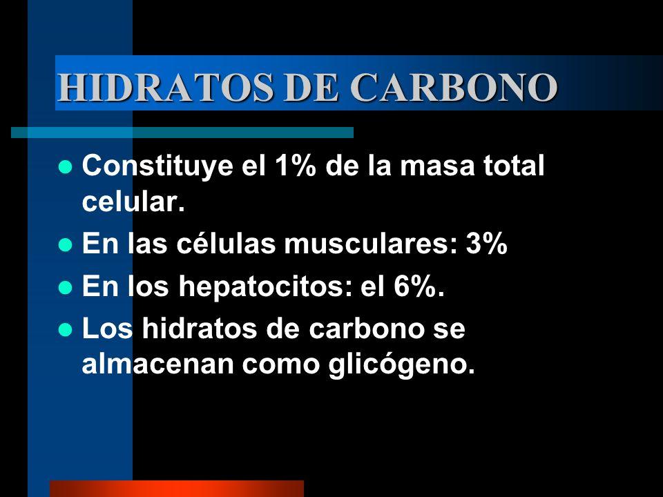 HIDRATOS DE CARBONO Constituye el 1% de la masa total celular.