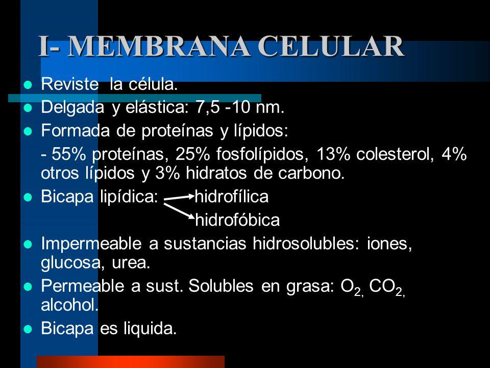 I- MEMBRANA CELULAR Reviste la célula. Delgada y elástica: 7,5 -10 nm.