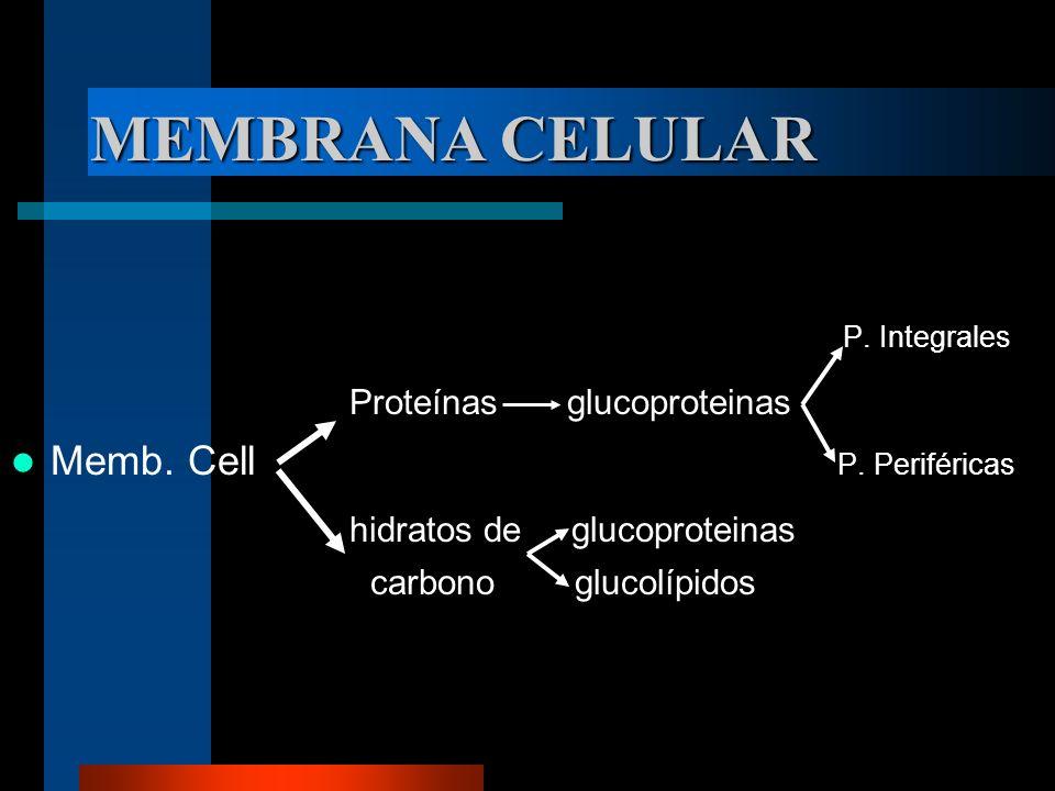 MEMBRANA CELULAR P. Integrales Proteínas glucoproteinas