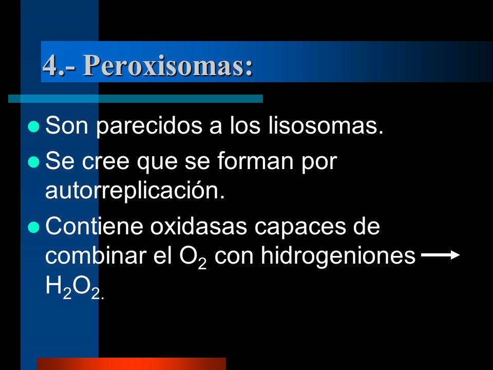 4.- Peroxisomas: Son parecidos a los lisosomas.