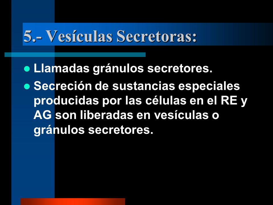 5.- Vesículas Secretoras:
