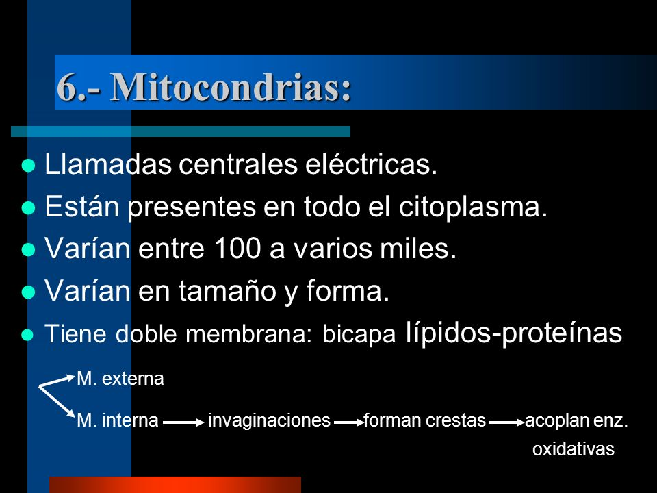 6.- Mitocondrias: Llamadas centrales eléctricas.
