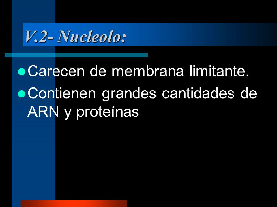 V.2- Nucleolo: Carecen de membrana limitante.