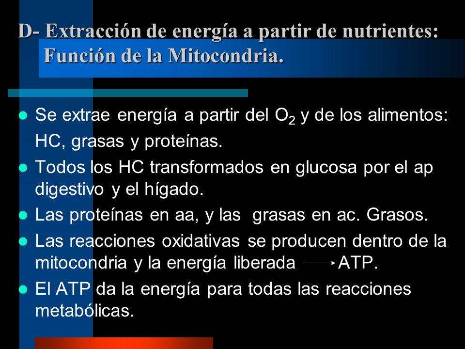 D- Extracción de energía a partir de nutrientes: Función de la Mitocondria.