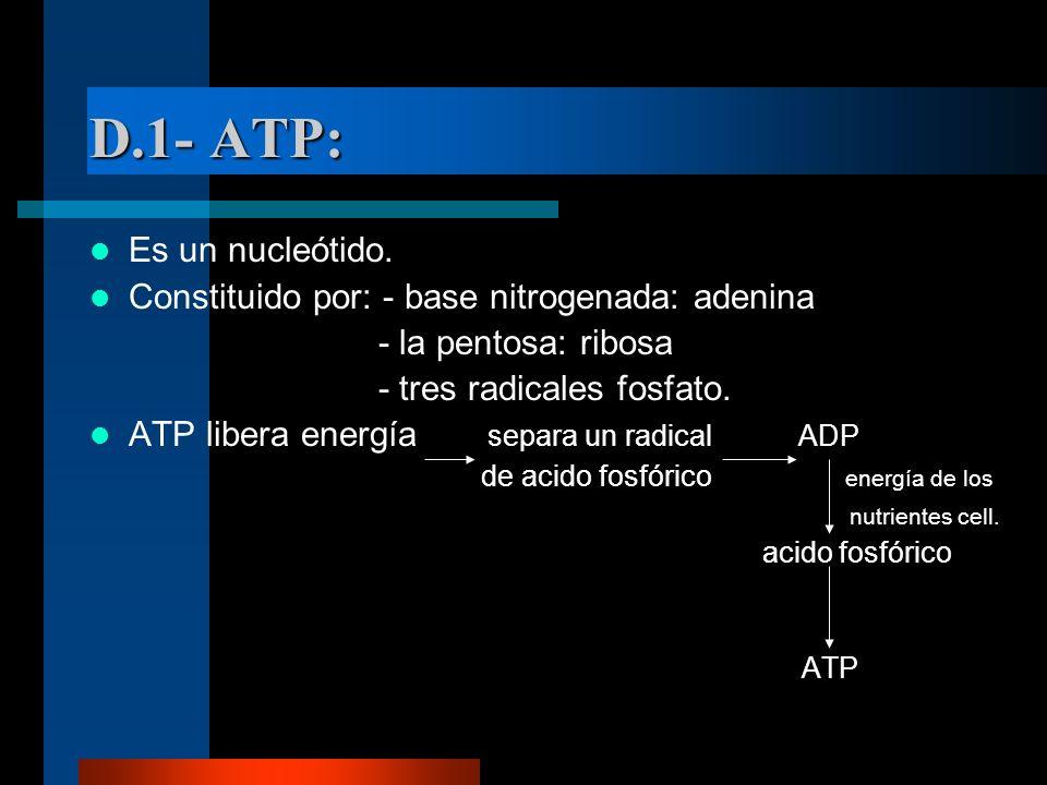 D.1- ATP: Es un nucleótido.