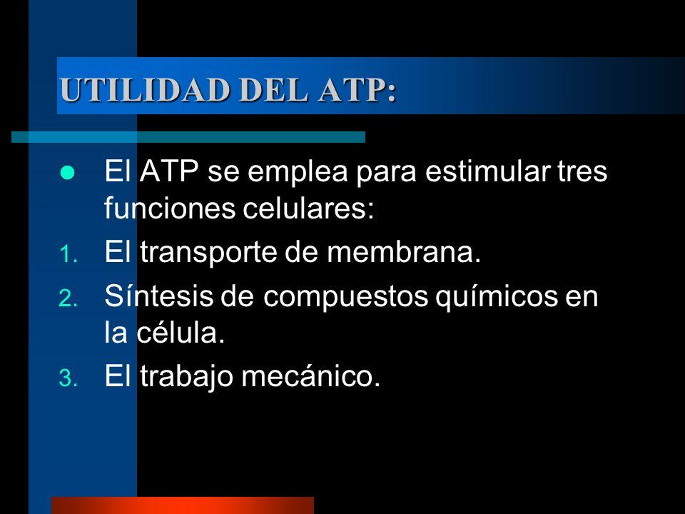 UTILIDAD DEL ATP: El ATP se emplea para estimular tres funciones celulares: El transporte de membrana.