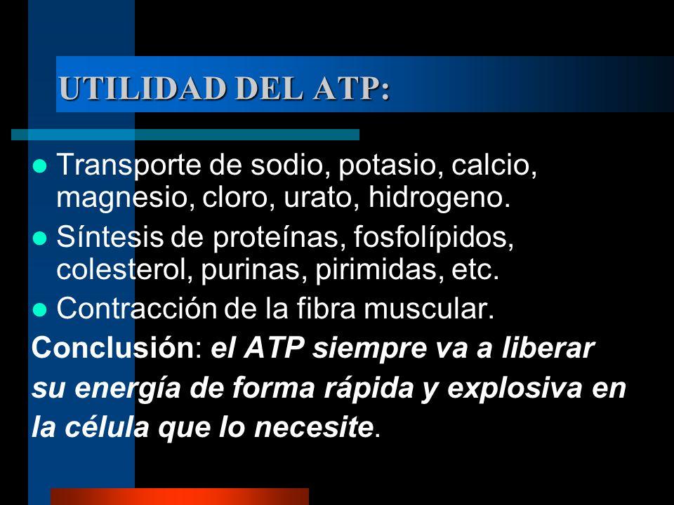 UTILIDAD DEL ATP: Transporte de sodio, potasio, calcio, magnesio, cloro, urato, hidrogeno.