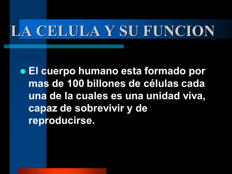 LA CELULA Y SU FUNCION