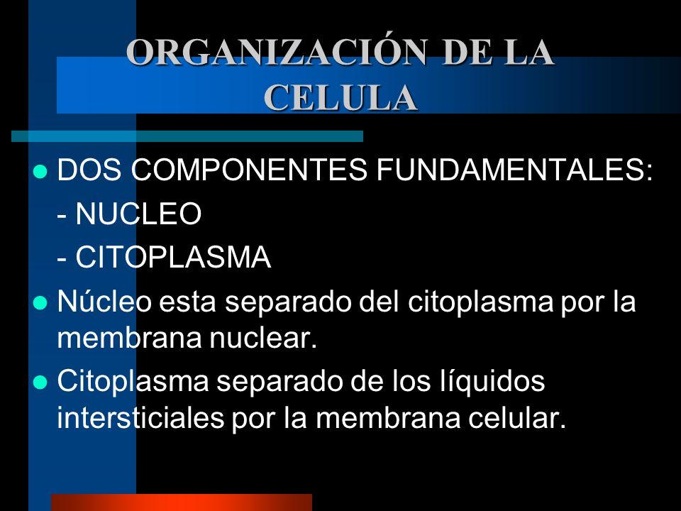 ORGANIZACIÓN DE LA CELULA