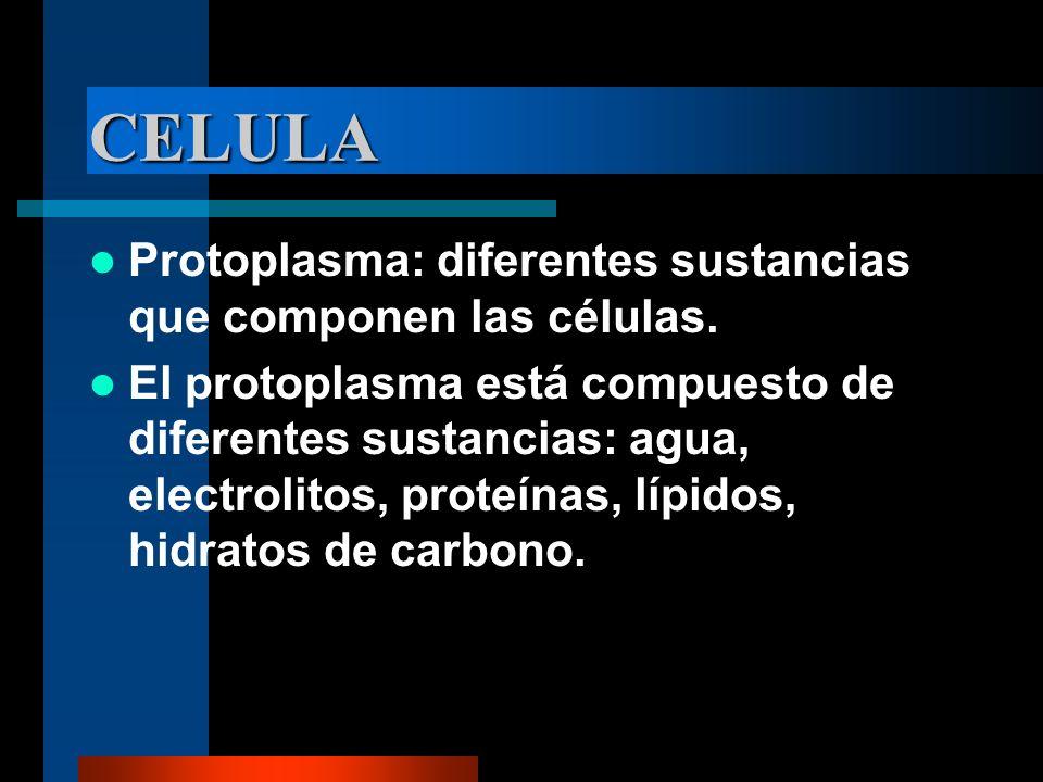 CELULA Protoplasma: diferentes sustancias que componen las células.