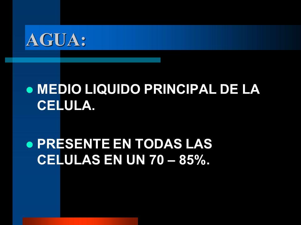 AGUA: MEDIO LIQUIDO PRINCIPAL DE LA CELULA.
