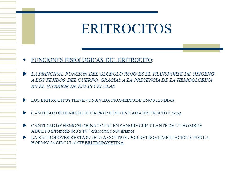 ERITROCITOS FUNCIONES FISIOLOGICAS DEL ERITROCITO: