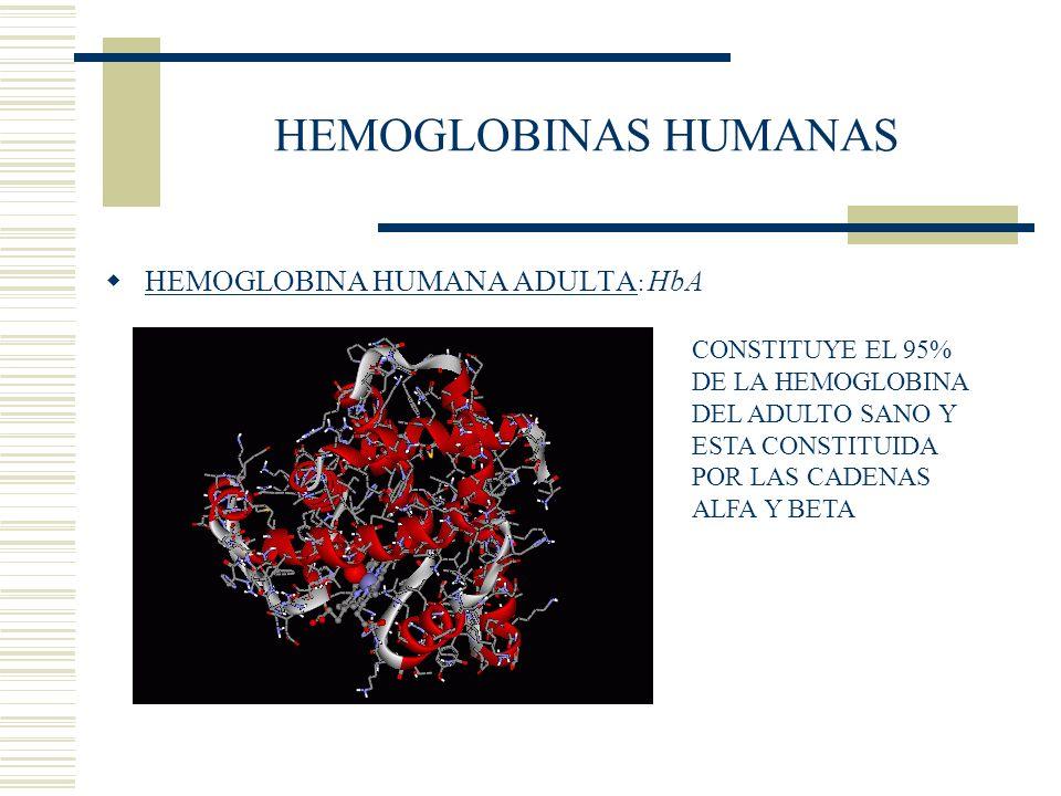 HEMOGLOBINAS HUMANAS HEMOGLOBINA HUMANA ADULTA: HbA