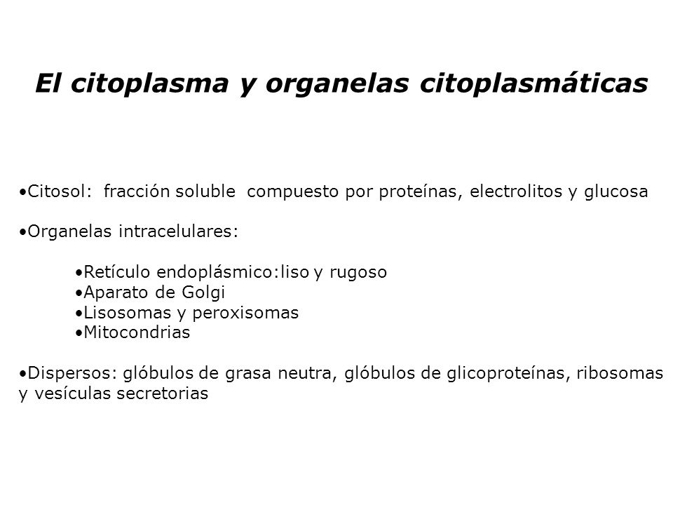 El citoplasma y organelas citoplasmáticas