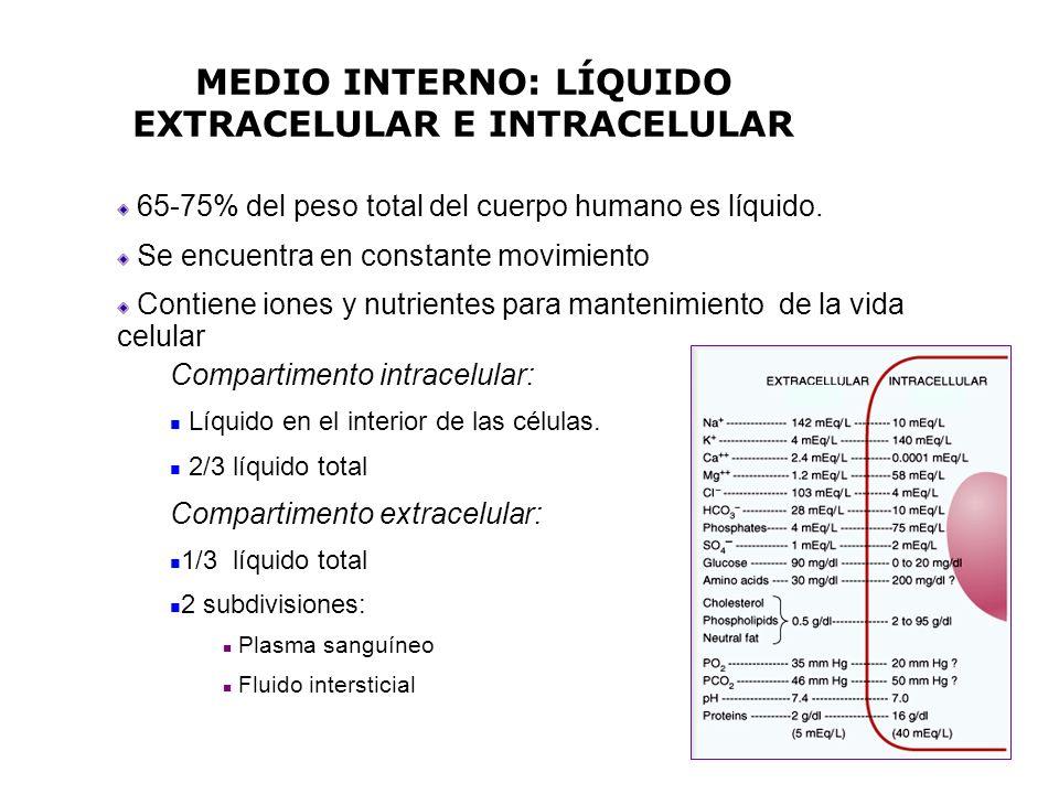 MEDIO INTERNO: LÍQUIDO EXTRACELULAR E INTRACELULAR