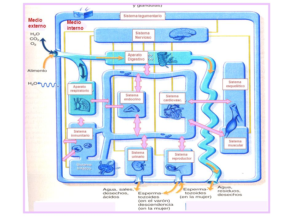 Medio externo interno Sistema tegumentario Sistema Nervioso Aparato