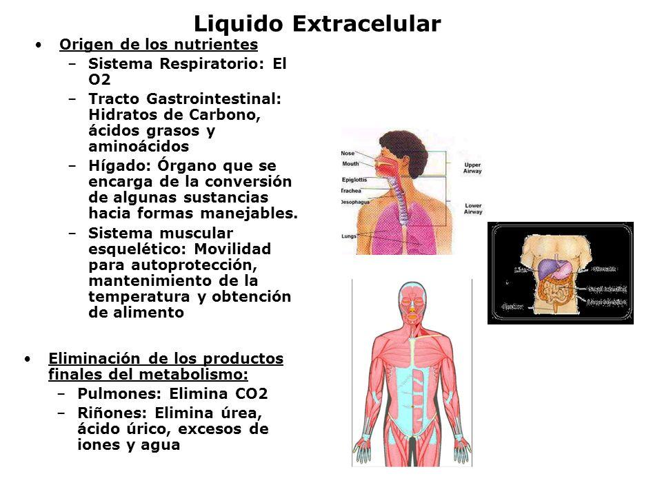 Liquido Extracelular Origen de los nutrientes