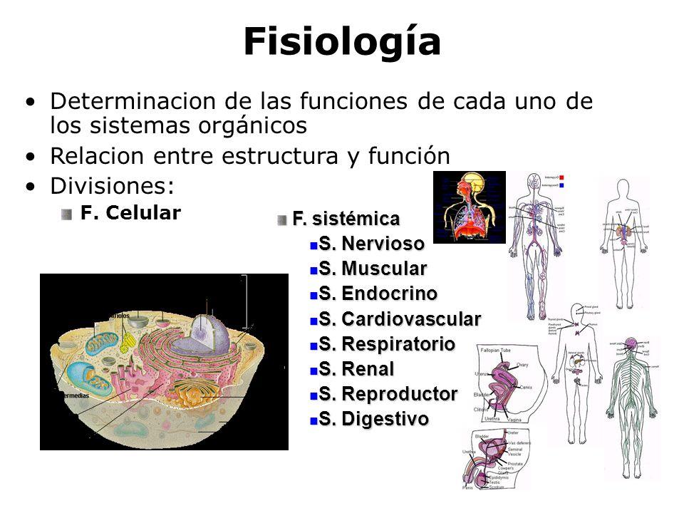 Fisiología Determinacion de las funciones de cada uno de los sistemas orgánicos. Relacion entre estructura y función.
