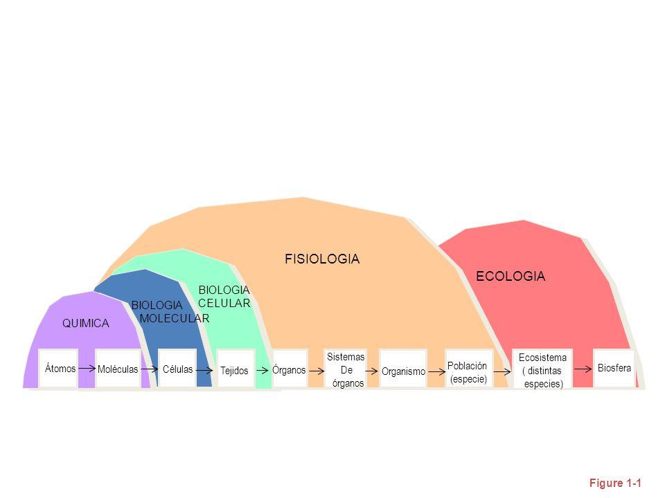 FISIOLOGIA ECOLOGIA BIOLOGIA CELULAR Átomos Moléculas Células Tejidos