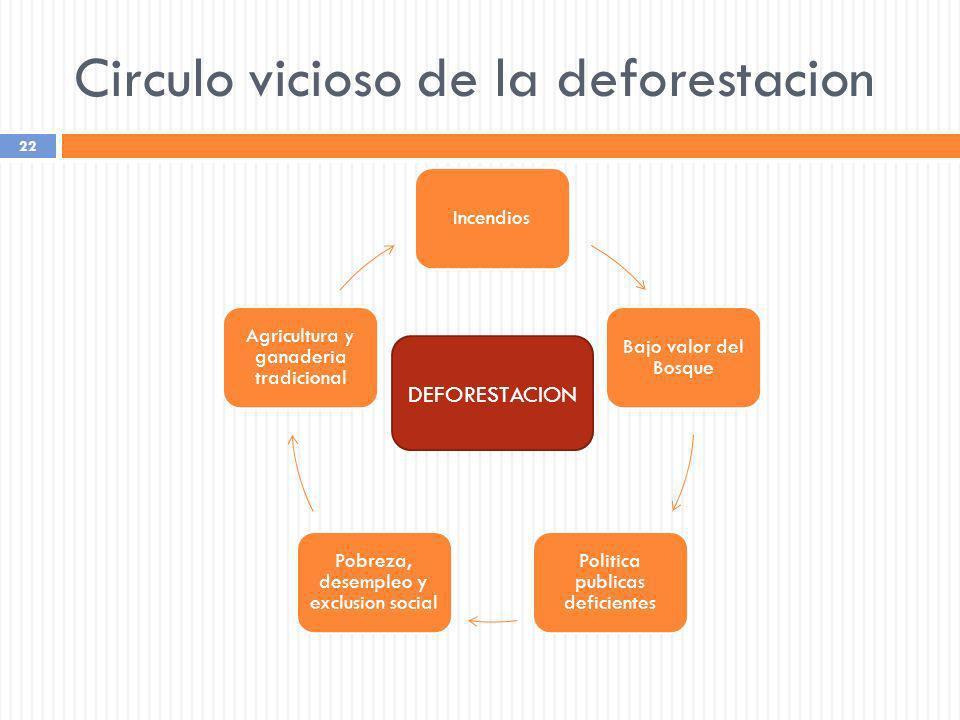 Circulo vicioso de la deforestacion