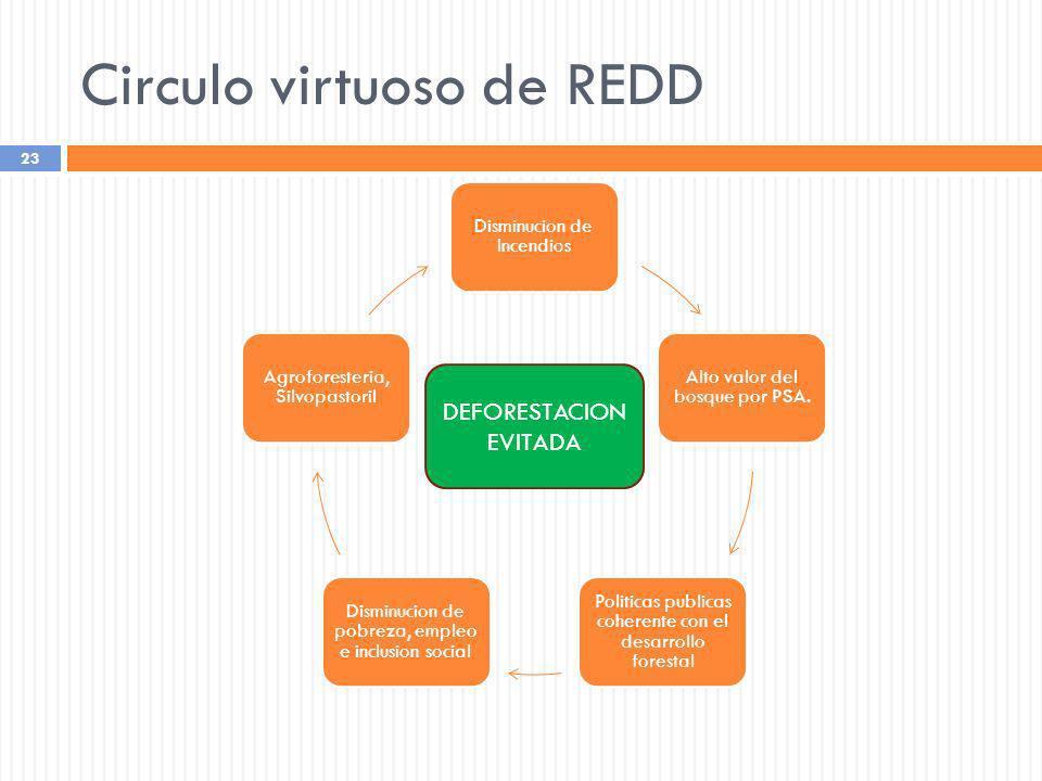 Circulo virtuoso de REDD