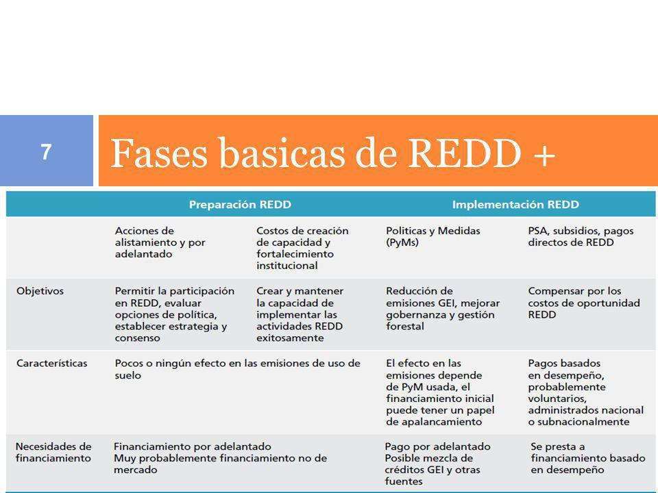 Fases basicas de REDD +