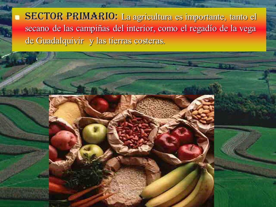 Sector primario: La agricultura es importante, tanto el secano de las campiñas del interior, como el regadío de la vega de Guadalquivir y las tierras costeras.