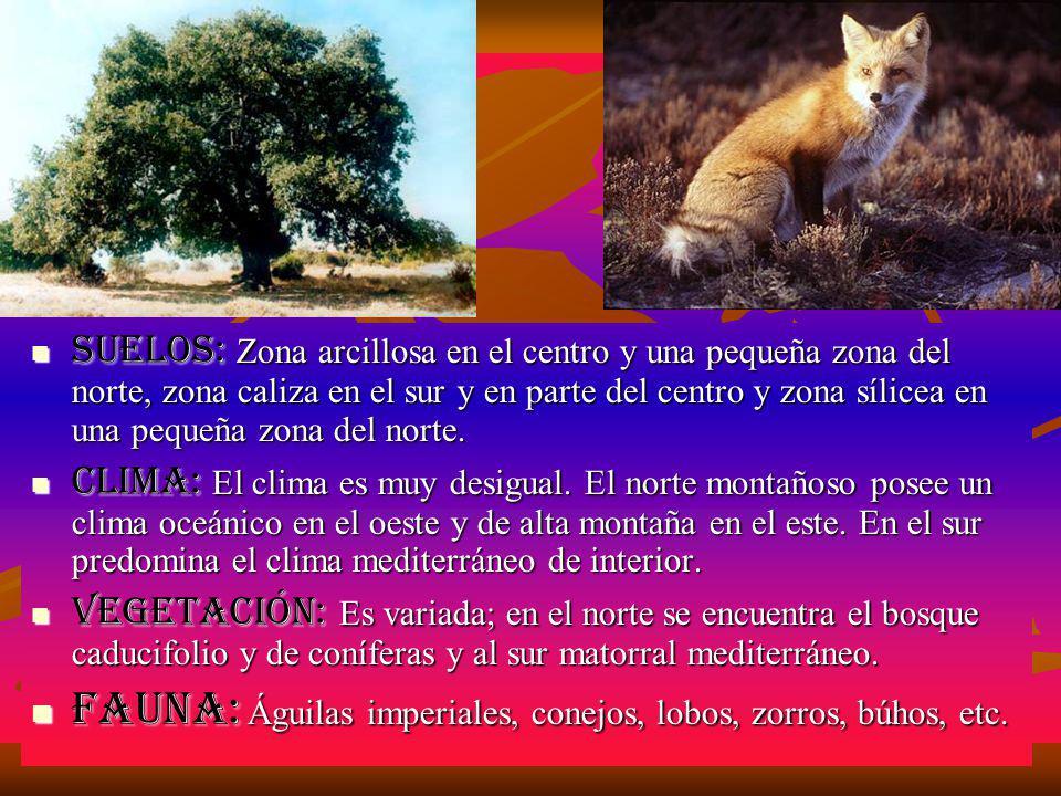 Fauna: Águilas imperiales, conejos, lobos, zorros, búhos, etc.