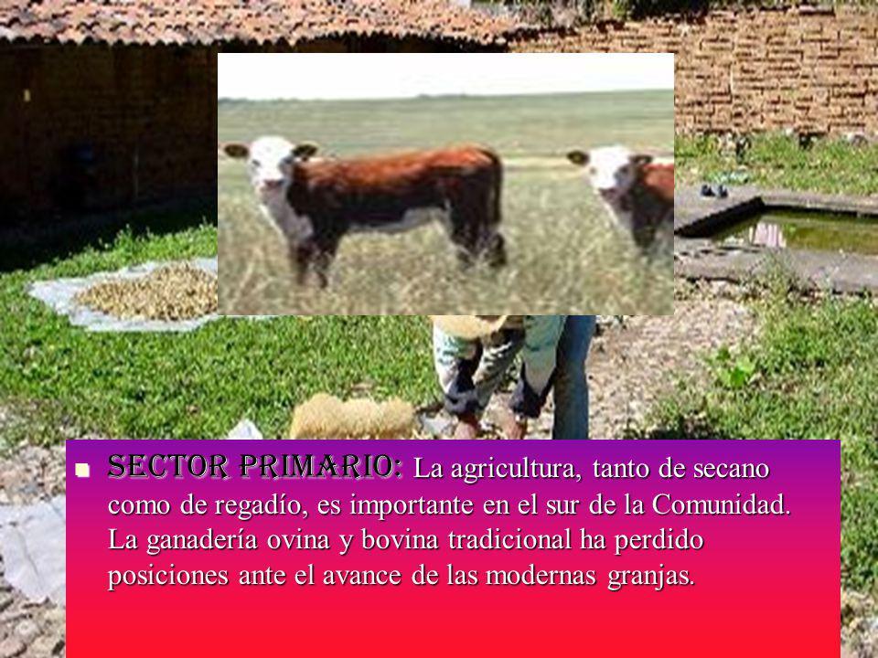 Sector primario: La agricultura, tanto de secano como de regadío, es importante en el sur de la Comunidad.