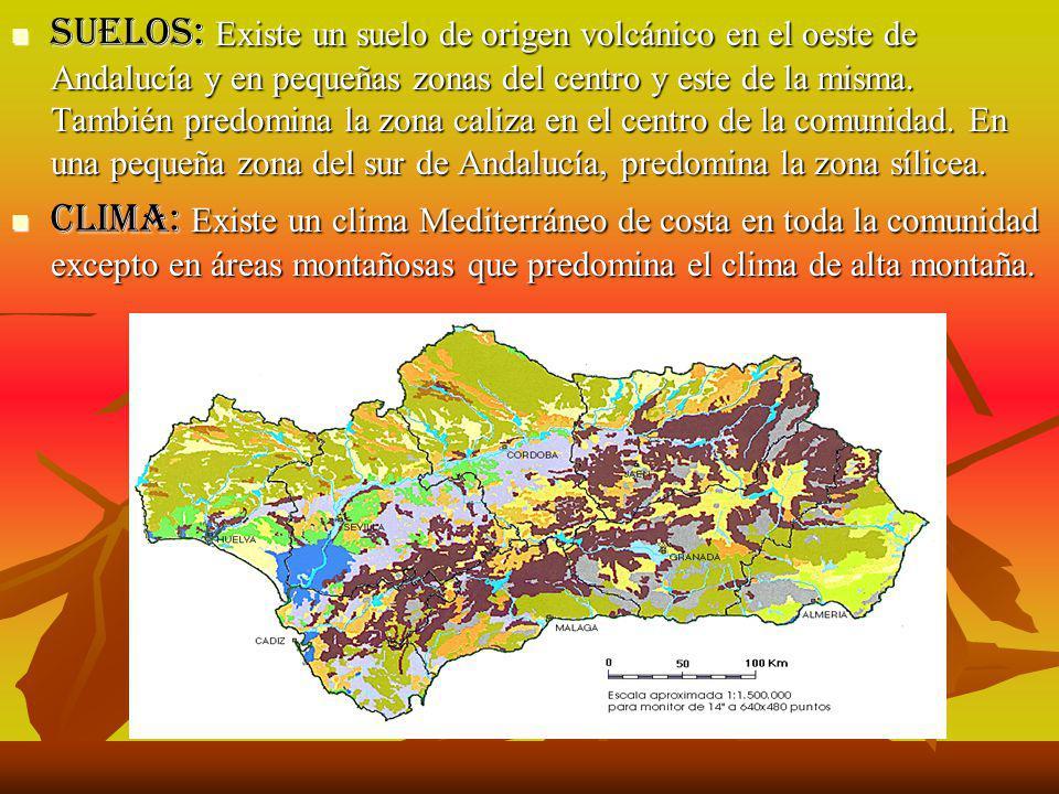 Suelos: Existe un suelo de origen volcánico en el oeste de Andalucía y en pequeñas zonas del centro y este de la misma. También predomina la zona caliza en el centro de la comunidad. En una pequeña zona del sur de Andalucía, predomina la zona sílicea.