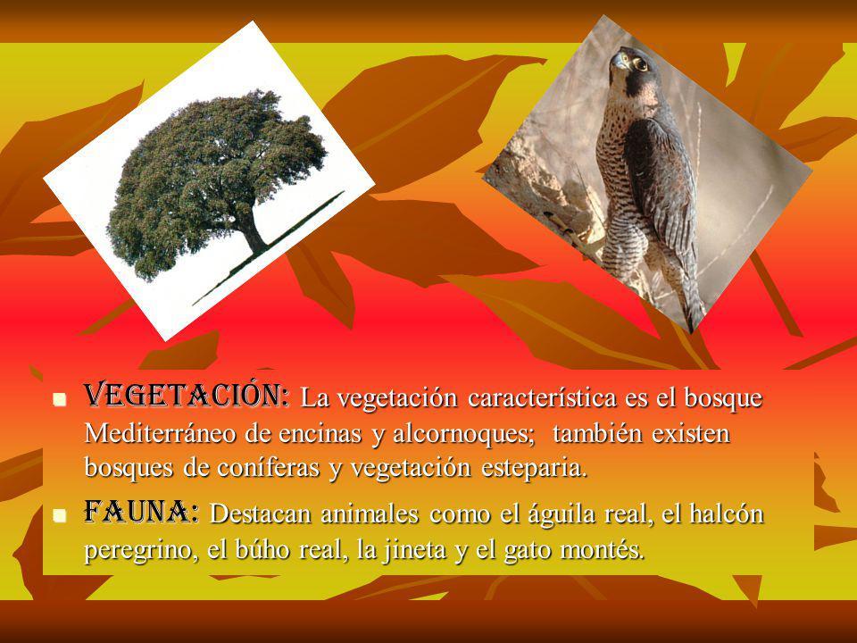 Vegetación: La vegetación característica es el bosque Mediterráneo de encinas y alcornoques; también existen bosques de coníferas y vegetación esteparia.
