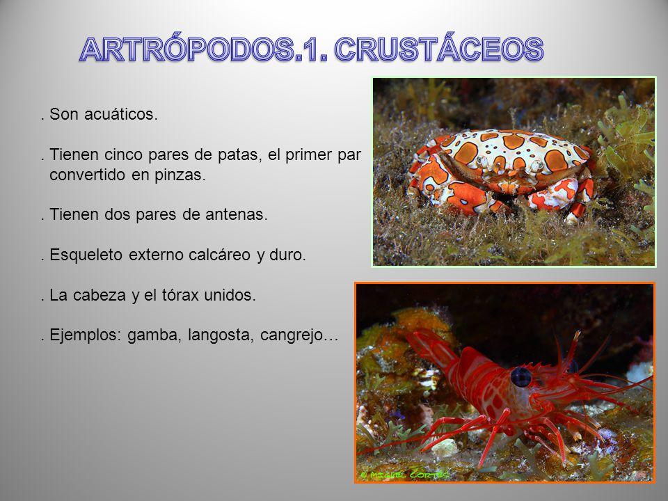 ARTRÓPODOS.1. CRUSTÁCEOS