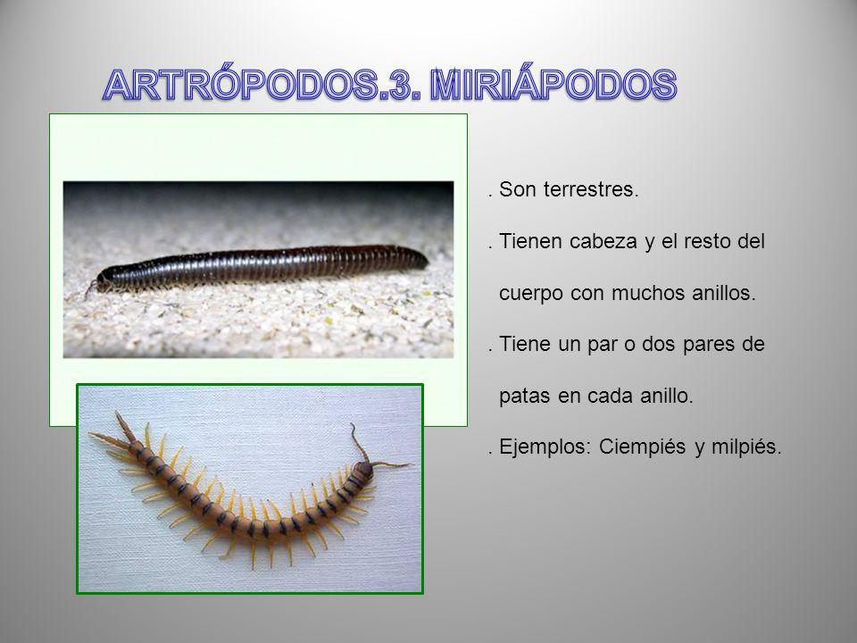 ARTRÓPODOS.3. MIRIÁPODOS