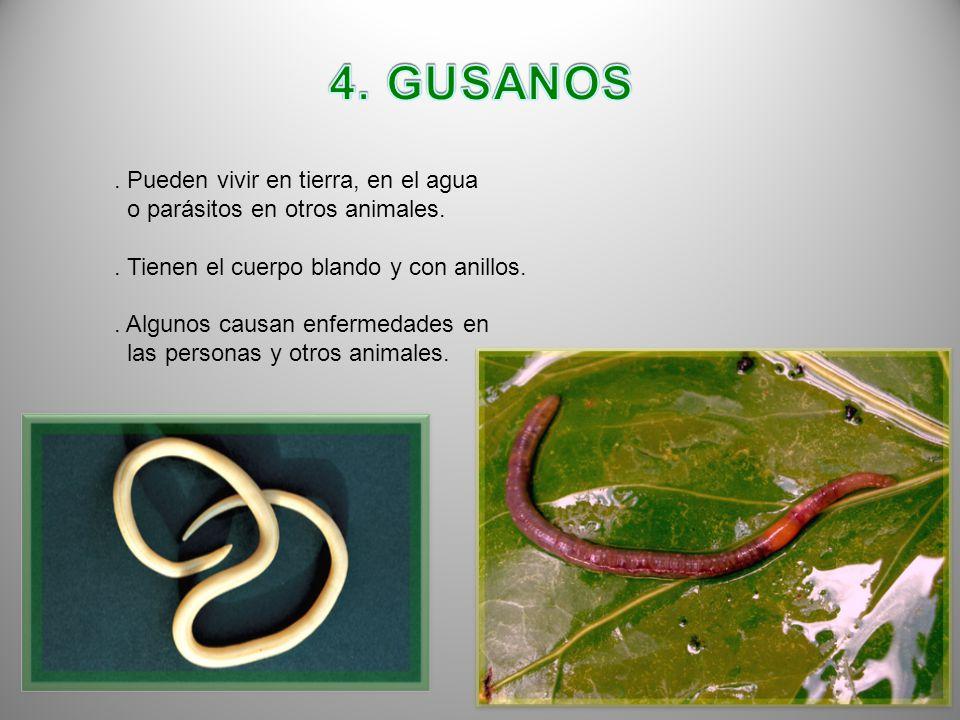 4. GUSANOS . Pueden vivir en tierra, en el agua