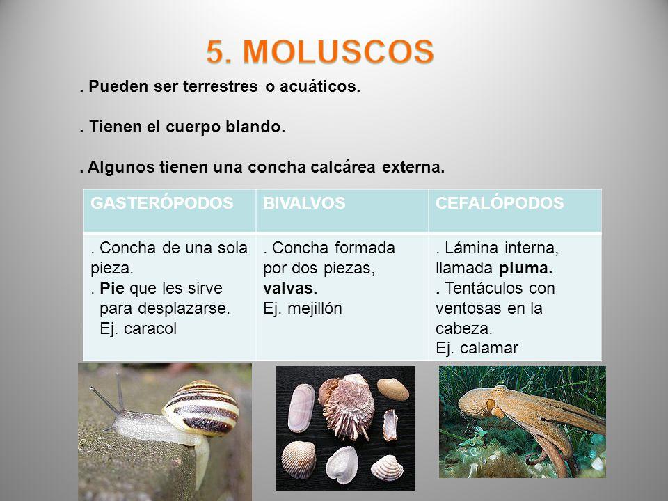 5. MOLUSCOS . Pueden ser terrestres o acuáticos.