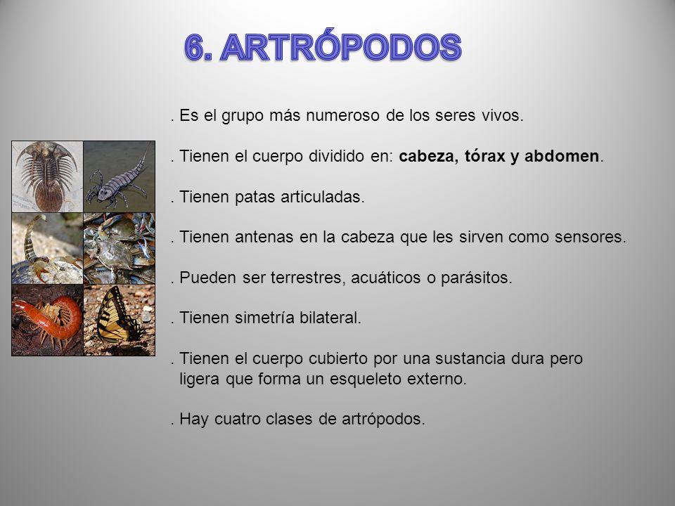 6. ARTRÓPODOS . Es el grupo más numeroso de los seres vivos.
