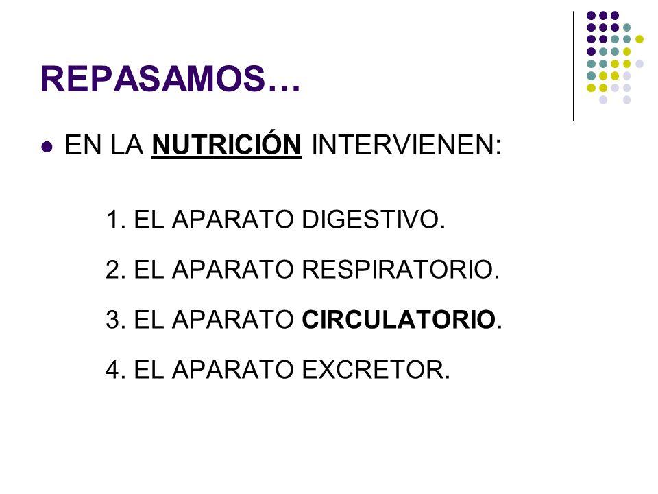 REPASAMOS… EN LA NUTRICIÓN INTERVIENEN: 1. EL APARATO DIGESTIVO.