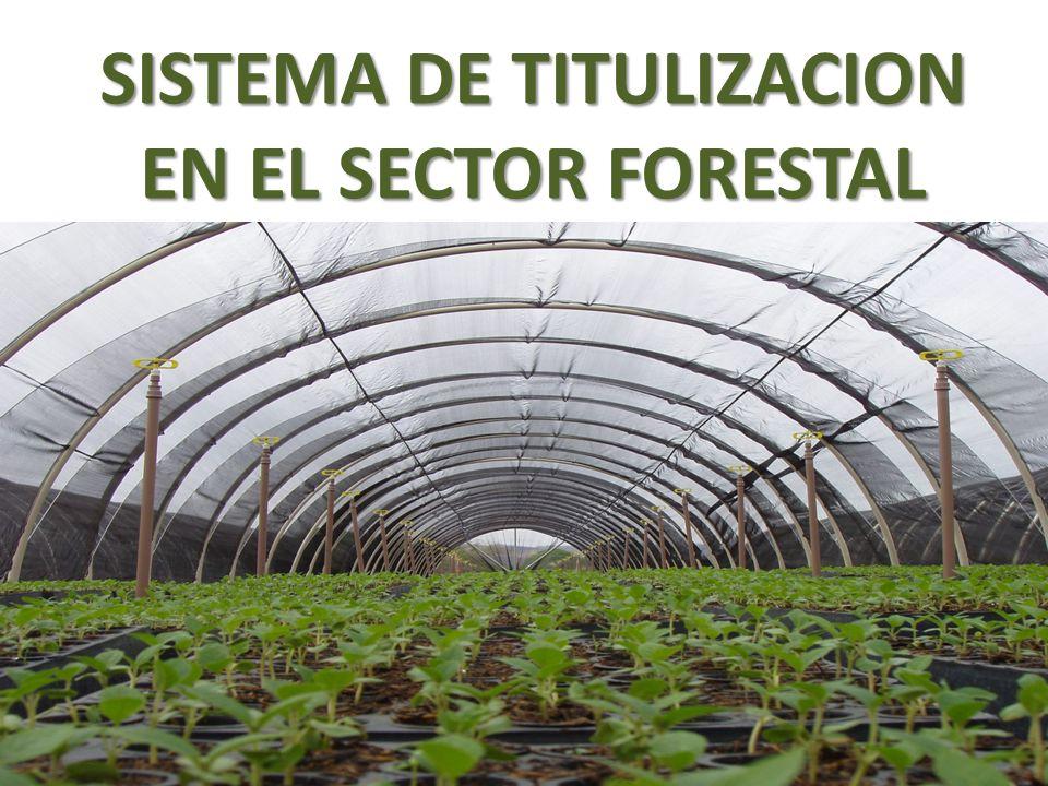 SISTEMA DE TITULIZACION EN EL SECTOR FORESTAL