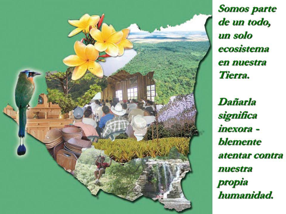 Somos parte de un todo, un solo ecosistema en nuestra Tierra.