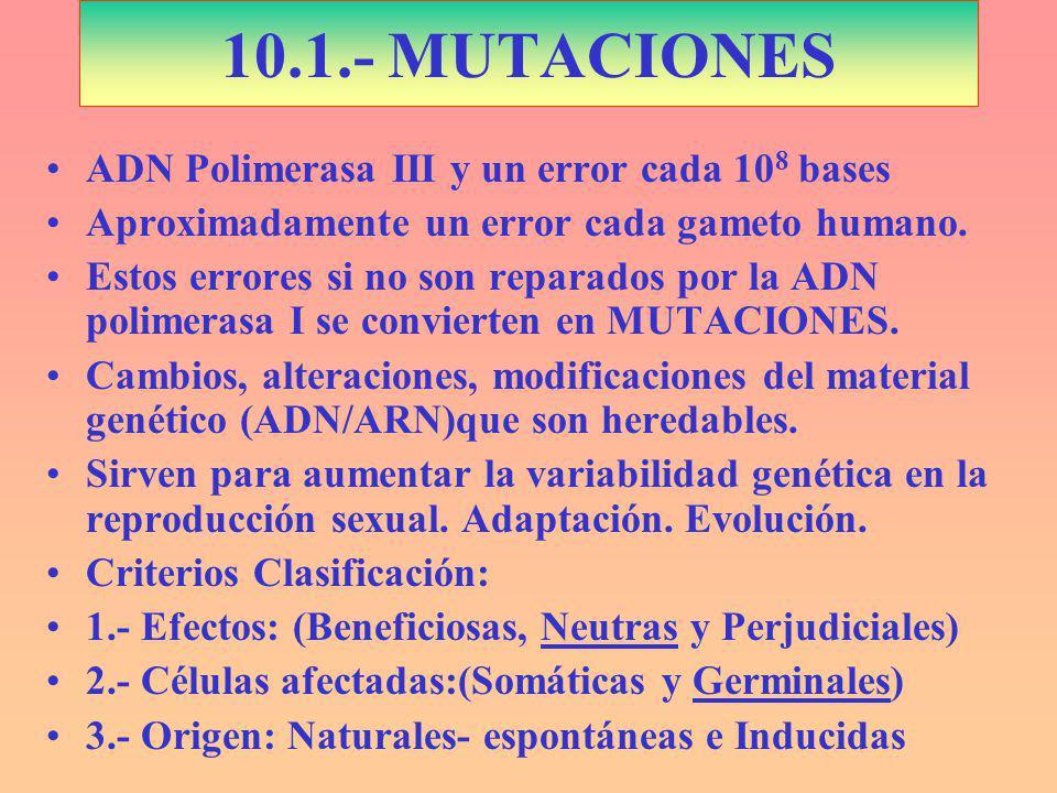 10.1.- MUTACIONES ADN Polimerasa III y un error cada 108 bases