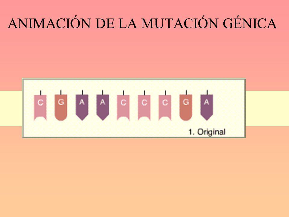 ANIMACIÓN DE LA MUTACIÓN GÉNICA