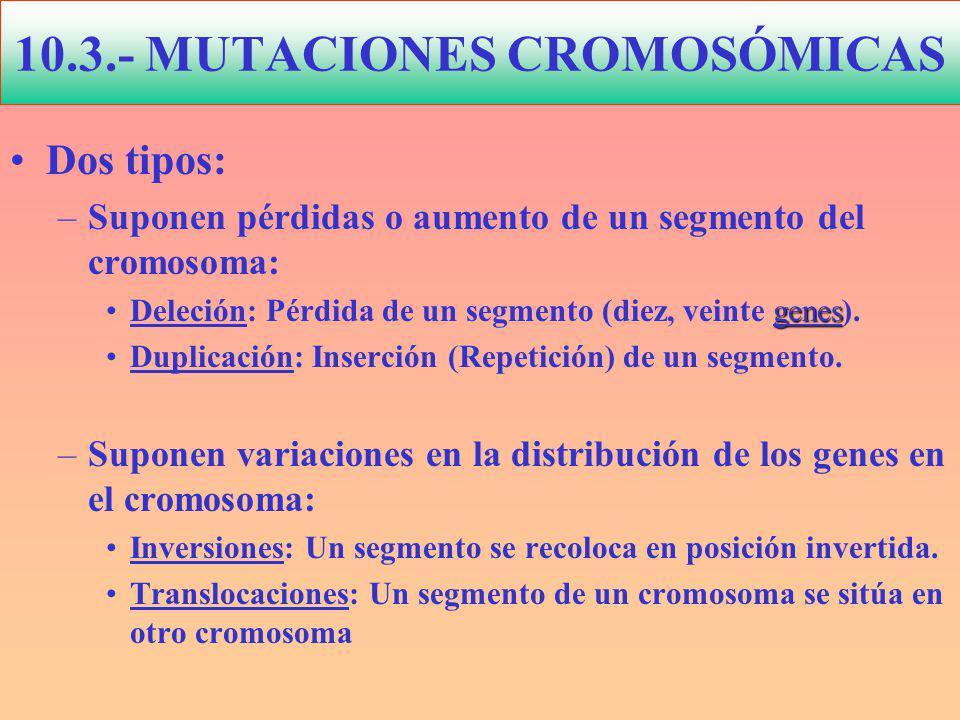 10.3.- MUTACIONES CROMOSÓMICAS