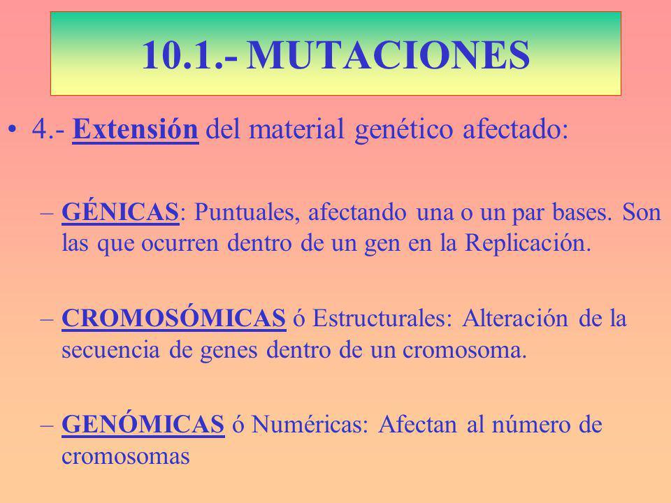 10.1.- MUTACIONES 4.- Extensión del material genético afectado: