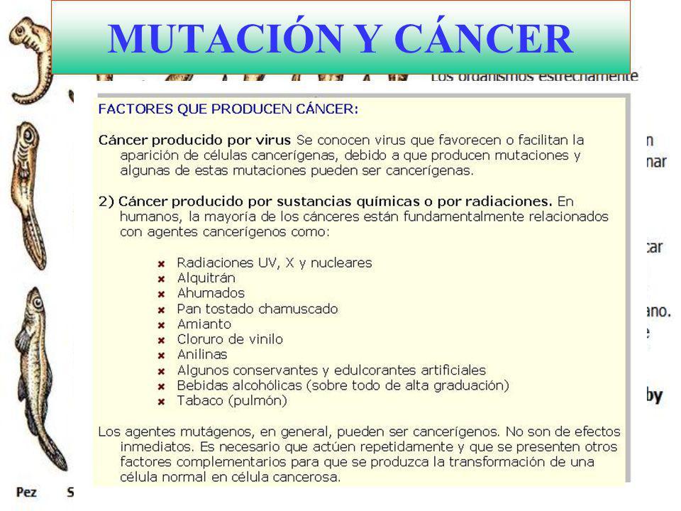 MUTACIÓN Y CÁNCER
