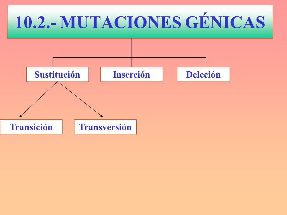 10.2.- MUTACIONES GÉNICAS Sustitución Inserción Deleción Transición