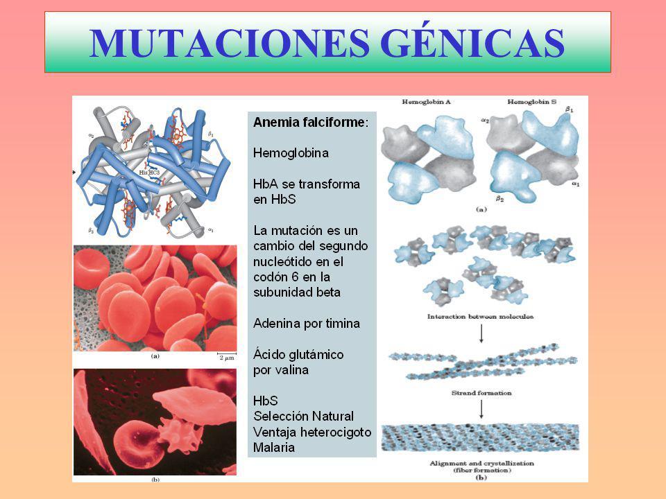 MUTACIONES GÉNICAS